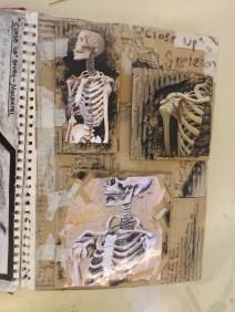 Observational mixed media Skeleton
